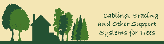 Support Systems Timberline Tree Care Service