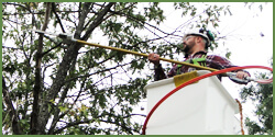 tree-maintenance