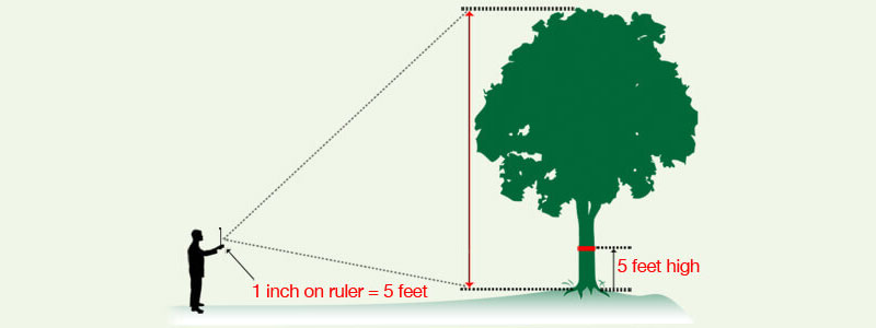 tree-quote-calculator-long